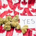 Wow! Here's How Much Marijuana Canadians Bought in 2017