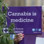 """Pain control: """"no evidence"""" cannabis improves outcomes"""