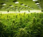 1933 Industries Inc. (OTCMKTS:TGIFF) To Transfer Cultivation Licenses To New Las Vegas Facility